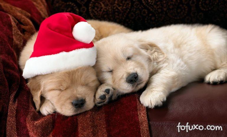 Um natal para cães!