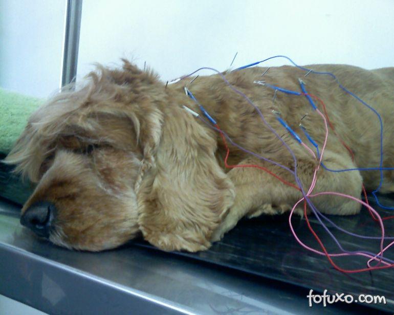 Saiba mais sobre os benefícios da Acupuntura em cães e gatos