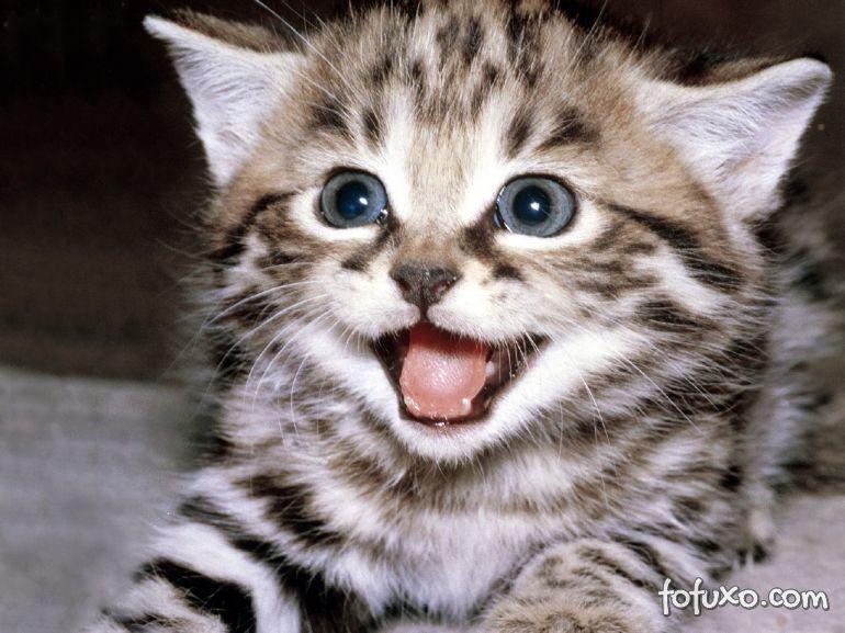 Dicas para deixar o seu gatinho mais feliz