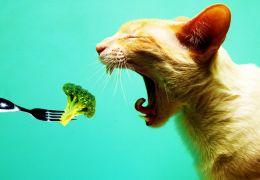 Para que serve a ração hipoalérgica para gatos?