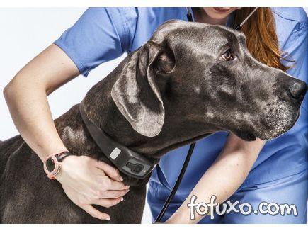 Coleira pode monitorar saúde dos cães
