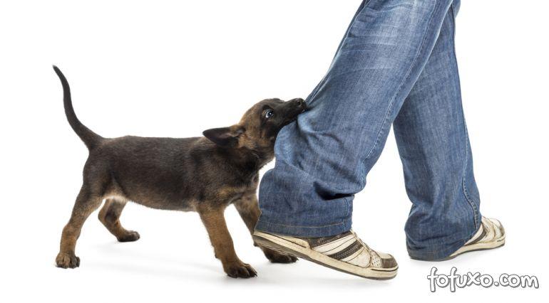 Jornal faz levantamentos de pontos comuns em situações de ataques caninos