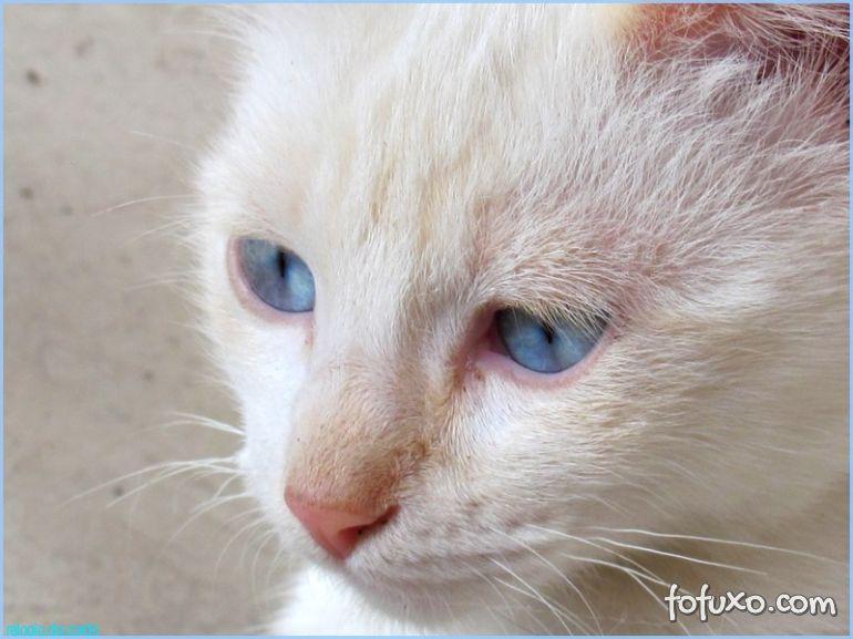 Livro afirma que gatos pensam que donos também são gatos