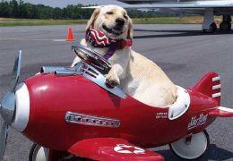 Passaporte animal: Saiba mais sobre o documento para cães e gatos