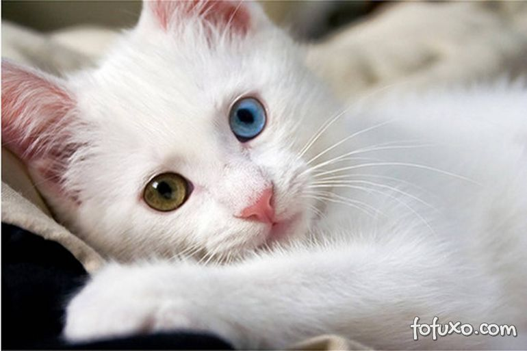 Novos estudo indicam que gatos reconhecem a voz do dono