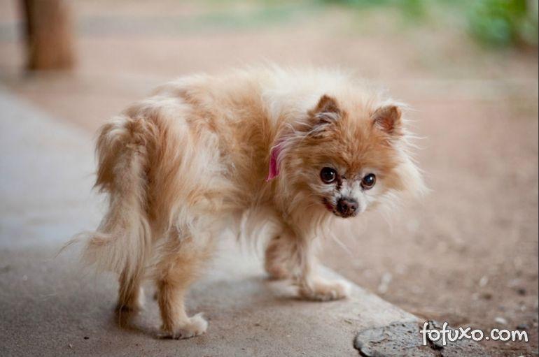 Confira algumas dica de brincadeiras para cães idosos