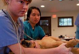 Doença misteriosa preocupa donos de cães na Inglaterra