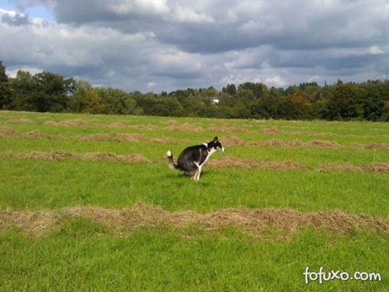 Cachorros seriam influenciados por campo magnético da Terra