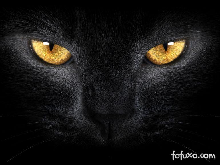 Quem tem medo de gato preto?