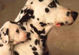 Como introduzir um novo animal na sua casa