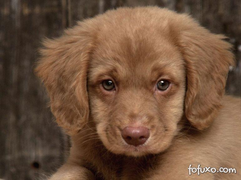 Dicas para cuidar do seu cachorro chorão