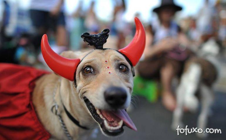 Conheça o Bloco de Carnaval para Cachorros