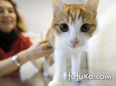Francês é condenado depois de ser filmado agredindo um gato