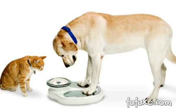 Diabetes Mellitus, a doença que cresce devido aos hábitos dos pets