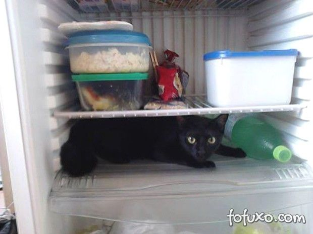 Gato dorme dentro da geladeira para fugir do calor