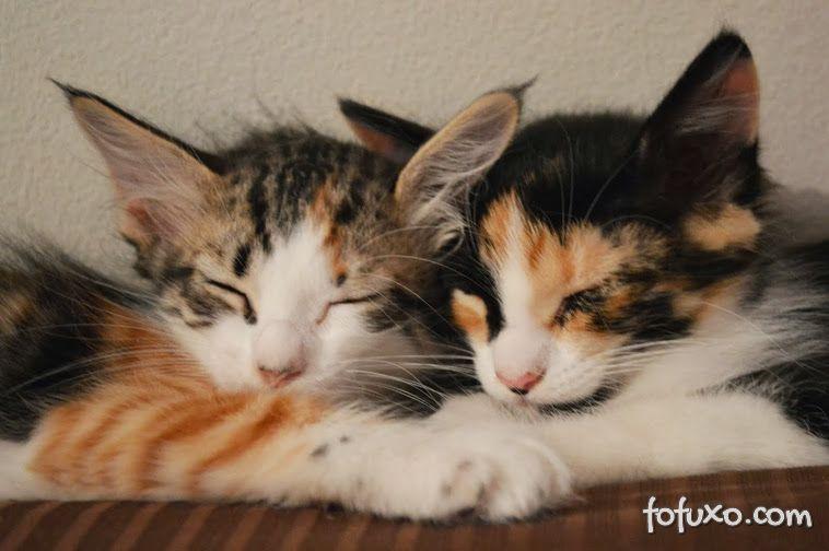 Gatos estão ganhando espaço na preferência dos brasileiros