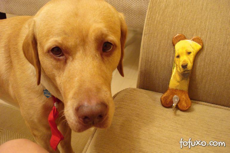 Pesquisadores dizem que cães aprendem a comover humanos