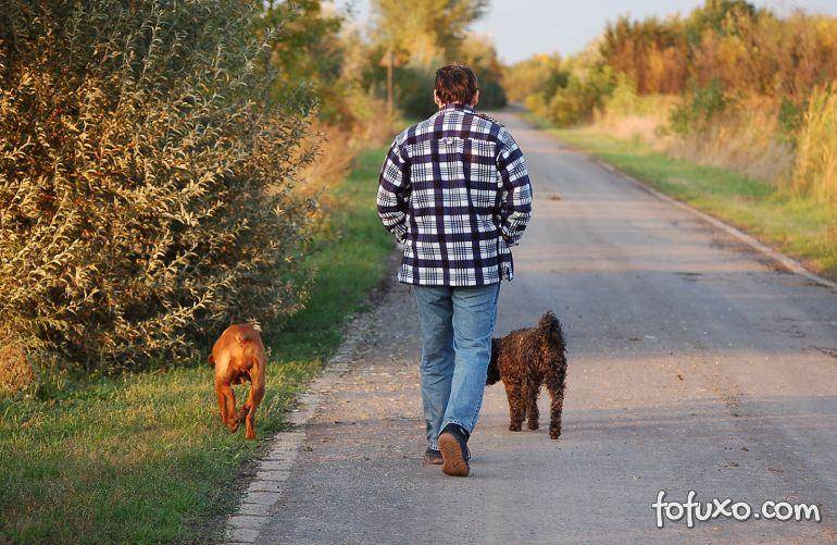 Cachorros também tornam humanos mais sociáveis