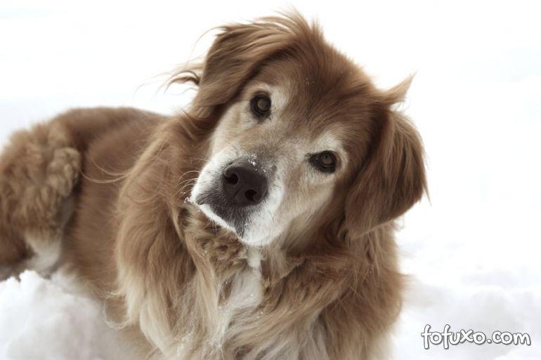 Cachorro confuso coloca a cabeça para o lado?
