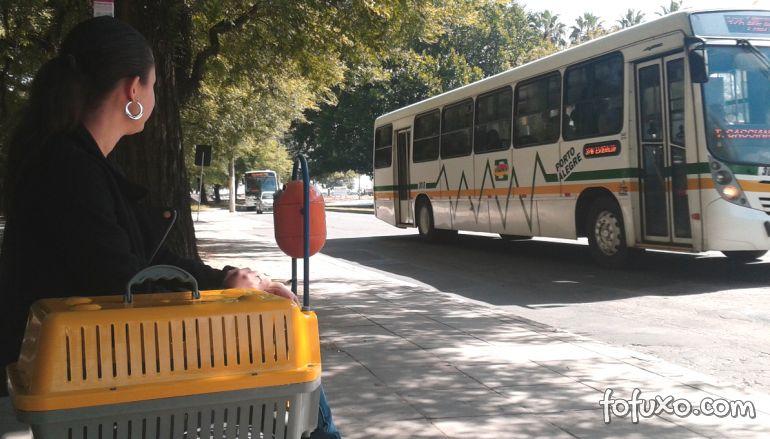 Saiba como viajar de ônibus com o seu cachorro