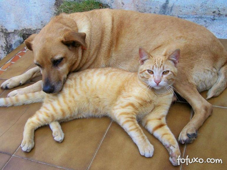 Pesquisadores afirmam que cães e gatos enxergam luzes ultravioletas