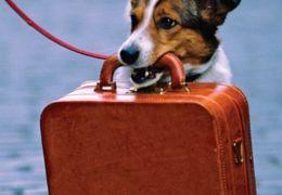 Passaporte para cães e gatos já começou a ser emitido