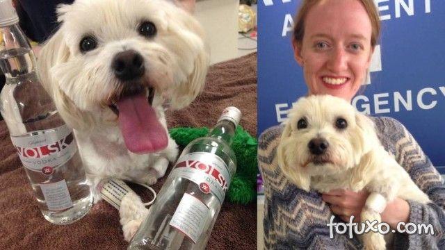 Cachorro encontra a cura em uma garrafa de vodca