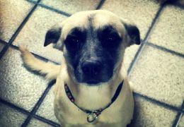Como fazer com que o cão para de pedir comida?