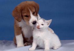 Estudos revelam que animais domésticos possuem consciência