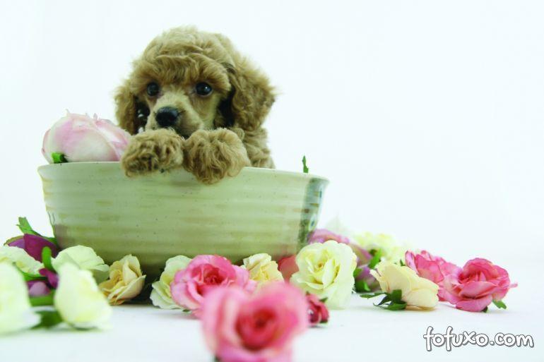 Florais para cães e gatos ganham espaço entre os donos