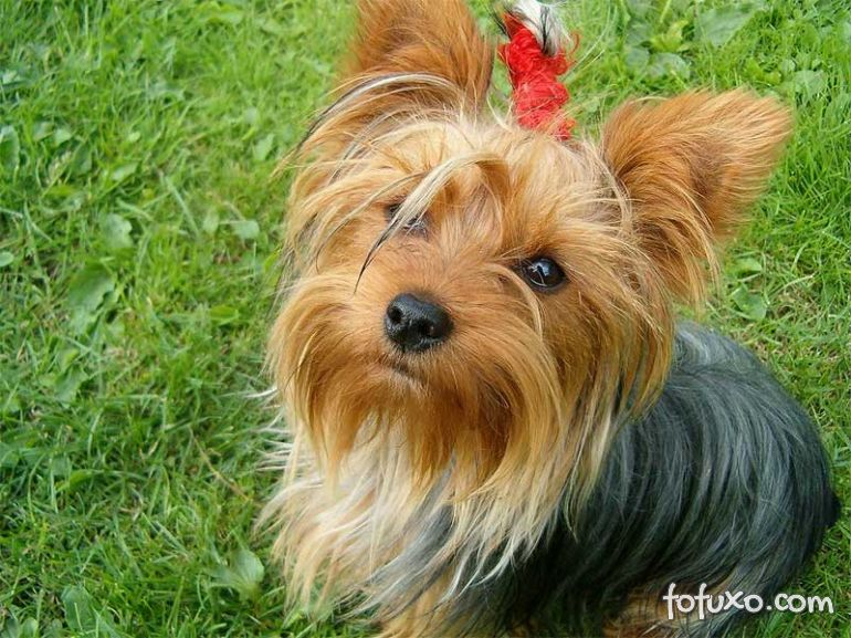 Pet Shop foi condenada por vender cachorro que estava em tratamento