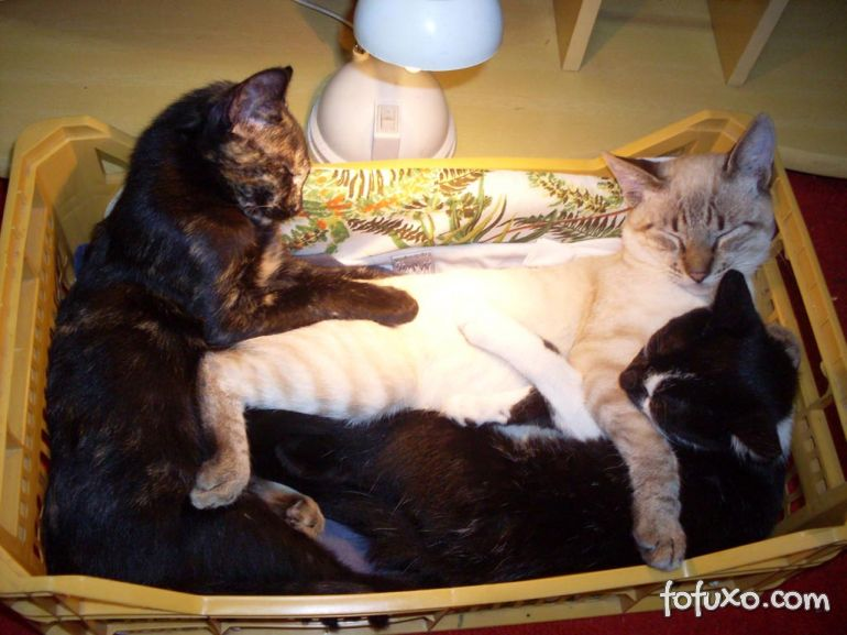Dicas para escolha da cama do seu gato