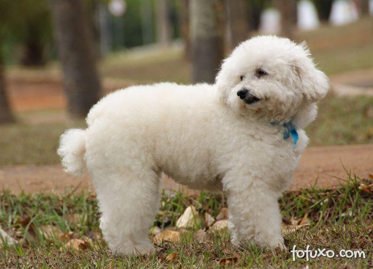 Terapia canina cresce no Brasil
