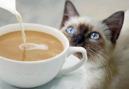 Conheça alguns alimentos que são proibidos para os gatos