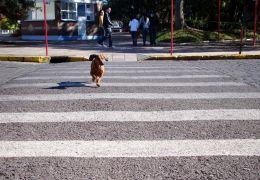 Especialistas afirmam que pets tendem a imitar comportamento humano