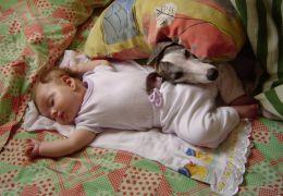 Dicas para uma convivência tranquila entre cães e bebês