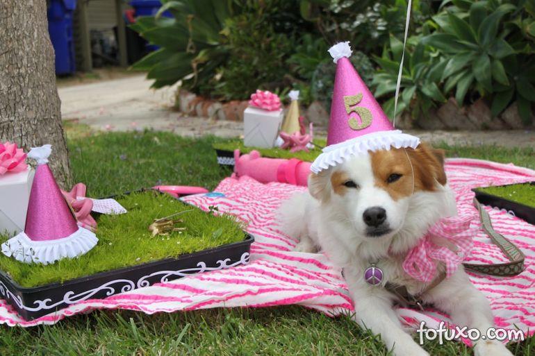 Comemore com uma festa para o seu cão