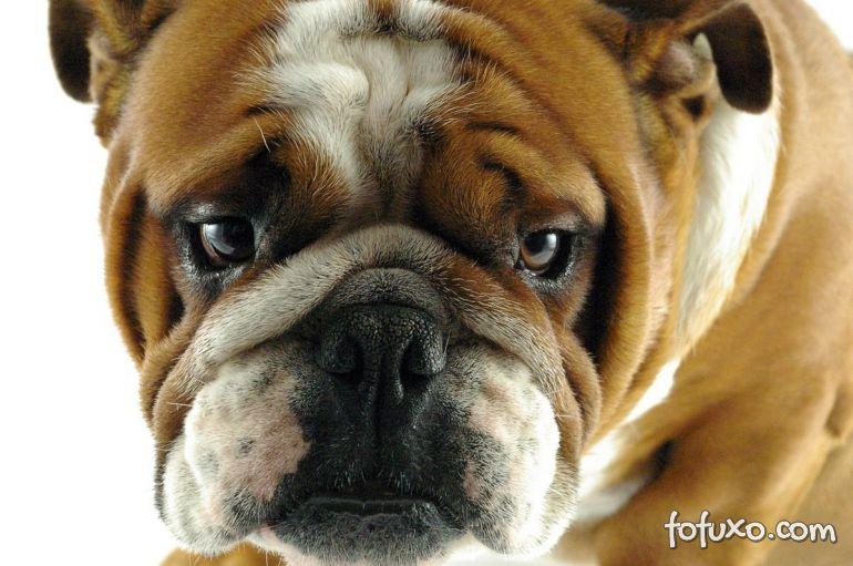 Dicas para evitar a depressão canina