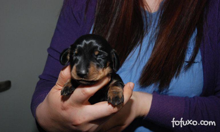 Conheça Mini Winnie – o cão clonado