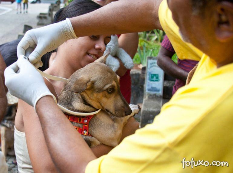 Rondonópolis testa novo projeto contra leishmaniose