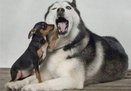 Dicas para lidar com ciúmes entre cães