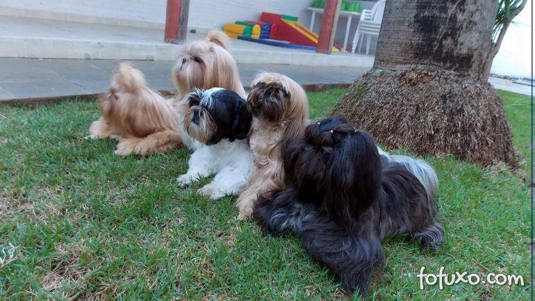 DF aprova proposta que restringe acesso de cachorros em parques