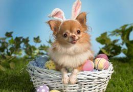 Mercado aumenta oferta de produtos de páscoa para cães