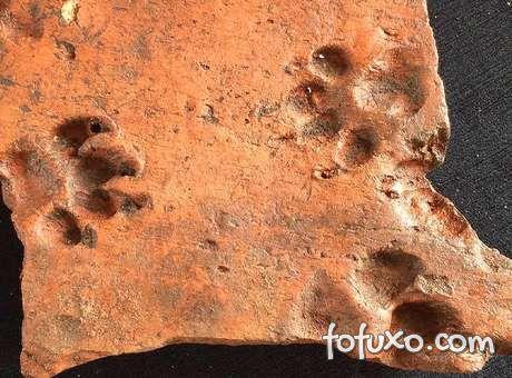 Encontradas pegadas de cães de 2 mil anos atrás