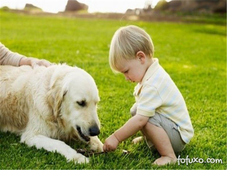 Você sabe quando o seu cão se torna um idoso?