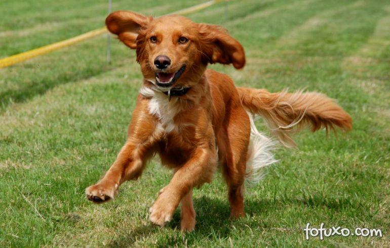 Como correr com seu cão sem correr riscos