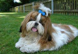 Dicas para escolher o xampu ideal para o seu cão