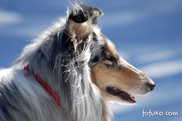 Japão terá abrigo exclusivo para cães idosos