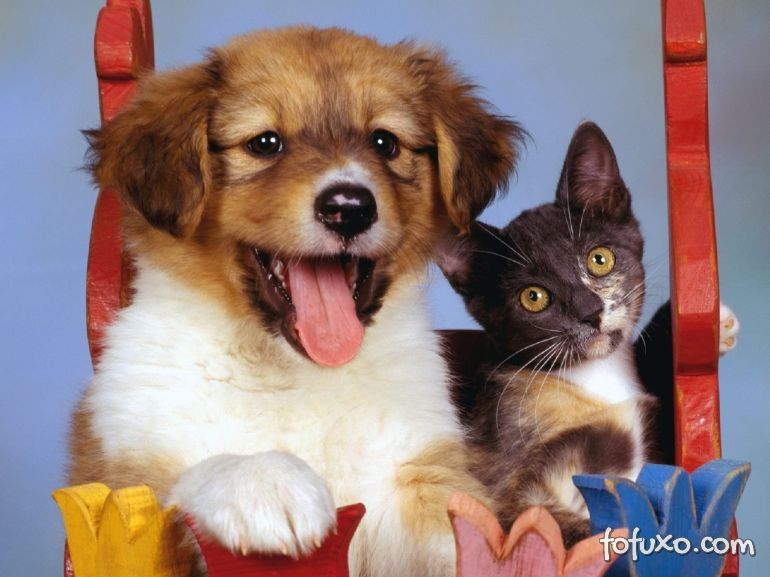 Donos de cães riem mais do que os donos de gatos