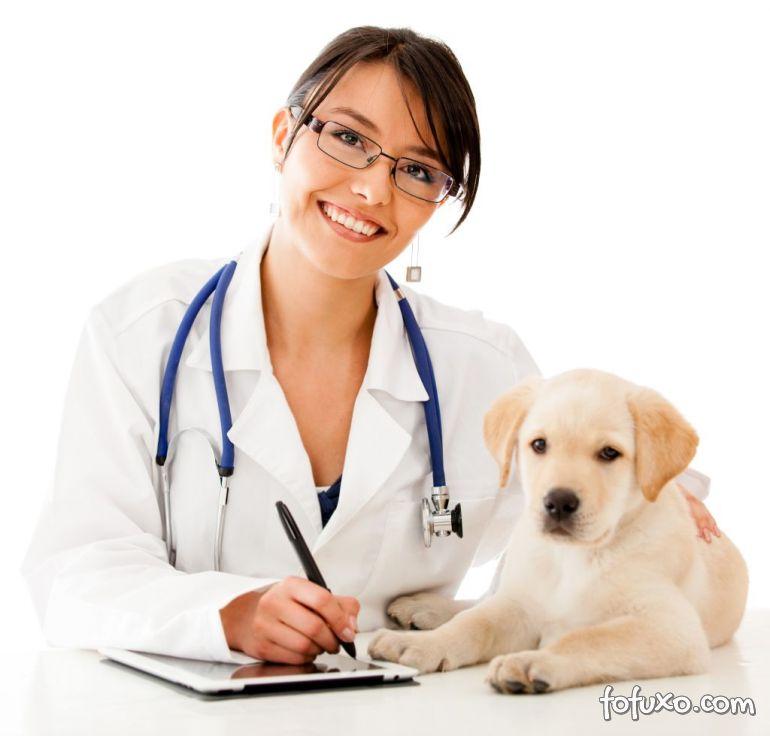 Saiba mais sobre os planos de saúde dos animais